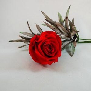rosa stabilizzata